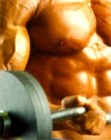 Bodybuilding eBooks