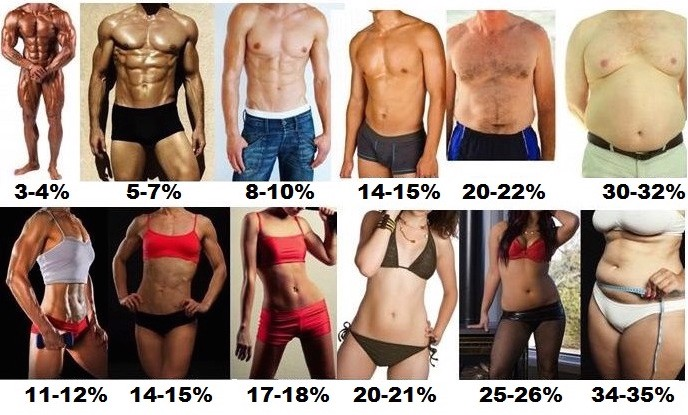 Bodybuilding Body Fat Calculator