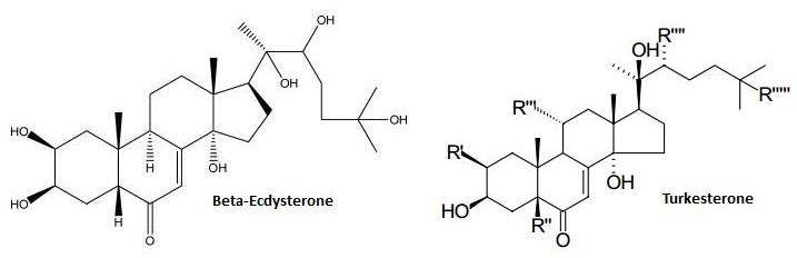 Ecdysteroids